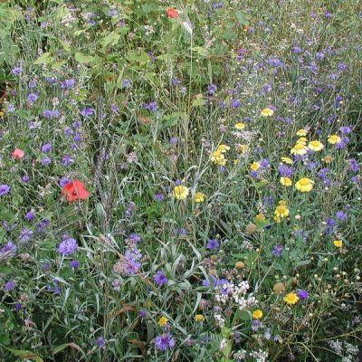 Bio-Feldblumenmischung