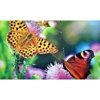 Fußmatte Schmetterlingswiese